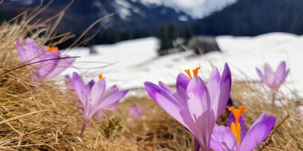Wiosna zawitała na Kalatówki
