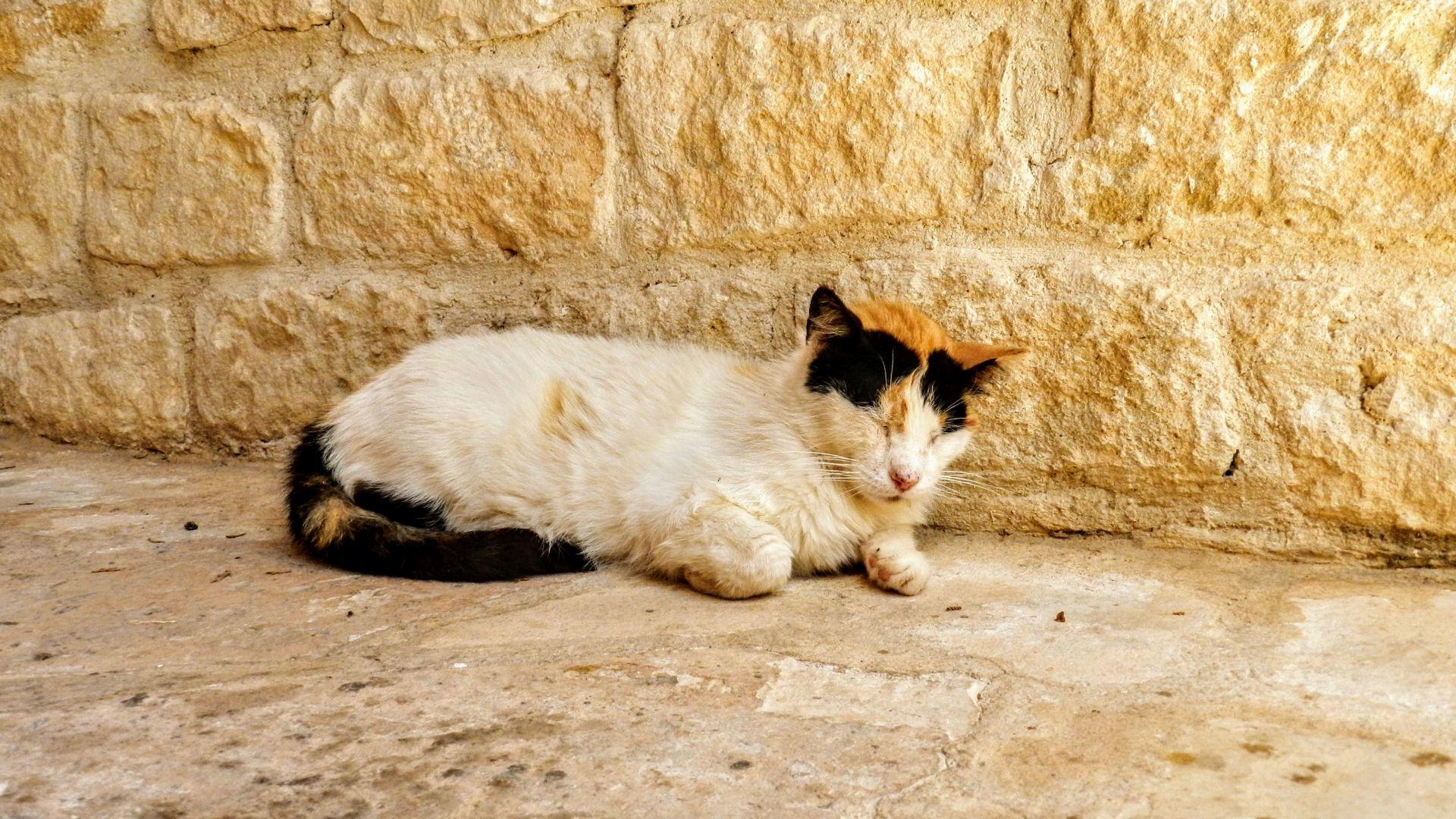 Koty w Klasztorze Agios Nikolaos ton Gaton